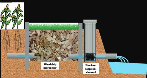 Specially designed biochar, seen lower right, absorbs phosphorus from tile drainage water filtered by a woodchip bioreactor. ISTC research scientist Wei Zheng is studying special biochar as a water filter, which could be used as slow-release fertilizer. (Illustration by Wei Zheng, ISTC)